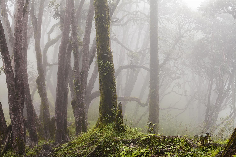 Fangorn's trees